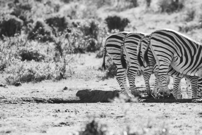 Südafrika Reisefotos Fotograf Herford MT-Fotos (26)