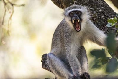 Südafrika Reisefotos Fotograf Herford MT-Fotos (3)