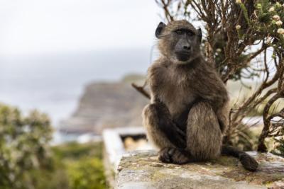 Südafrika Reisefotos Fotograf Herford MT-Fotos (8)